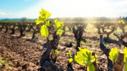ribera-duero-torremoron-vino-tinto-bodega-noble-mejor-vino-2019