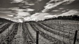 torremoron-bodega-duero-ribera-vino-mejor-puntuacion-wine